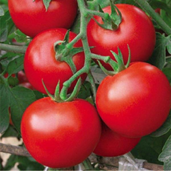 Seminte bio rosii