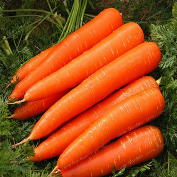 Seminte bio morcov