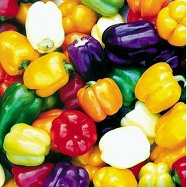 Seminte bio ardei gras mix