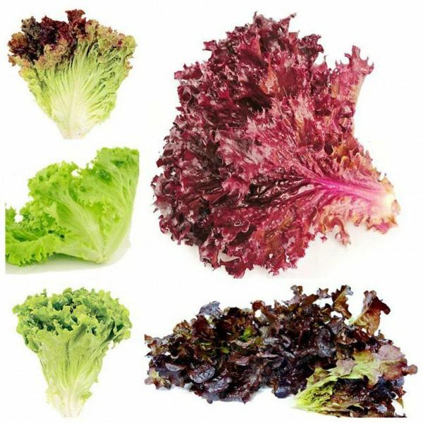 Seminte bio salata