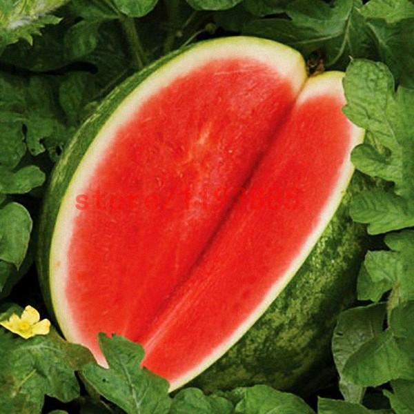 Seminte bio pepene rosu