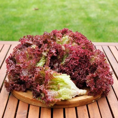 Seminte salata