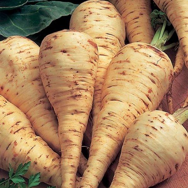Seminte pastarnac