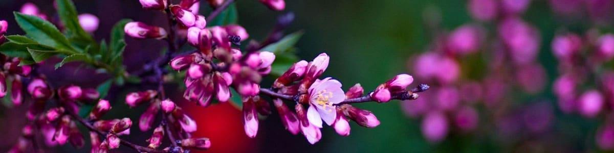 cele mai frumoase flori si gradini
