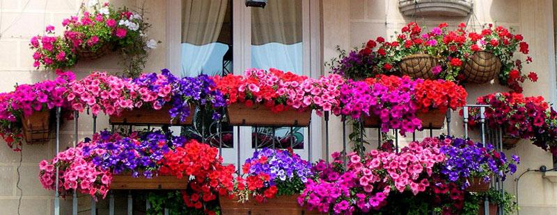 Sa ne bucuram de flori