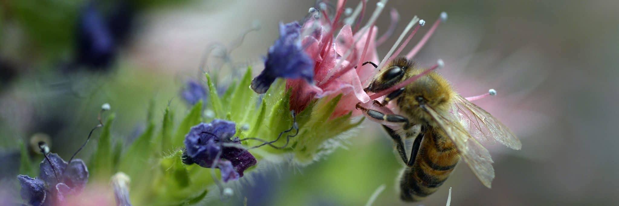 Plante iubite de insectele polenizatoare